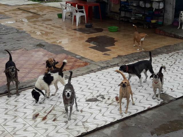 Vereador busca área para transferir animais de canil alvo de reclamações