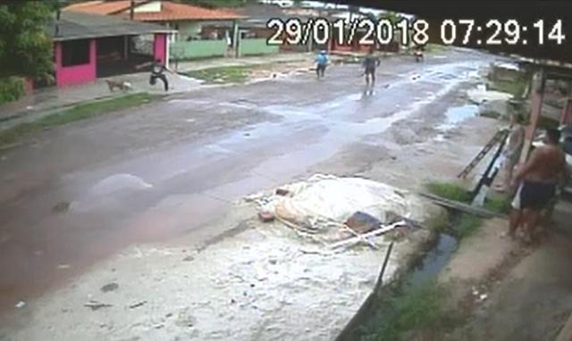 VÍDEO: Pitbull aterroriza moradores do Nova Esperança