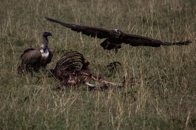 Opinião: o abutre nosso de todas as madrugadas