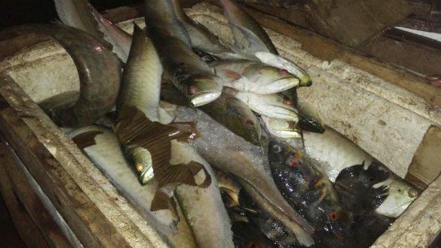 Uma tonelada de peixes proibidos para pesca é apreendida