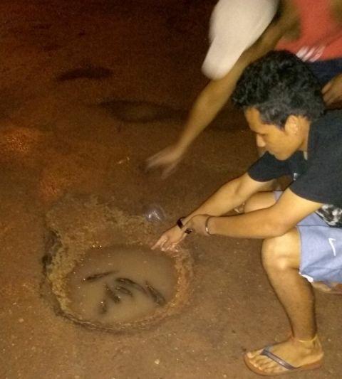 Em protesto, moradores colocam tamuatás em buracos