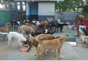 Mostra Cultural quer arrecadar alimentos para animais abandonados