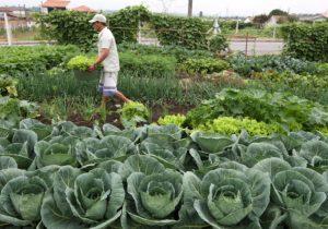 Ideia sustentável: horta comunitária