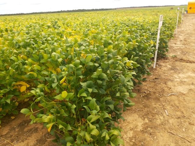 Decisão da Justiça paralisa regularização de terras no Amapá