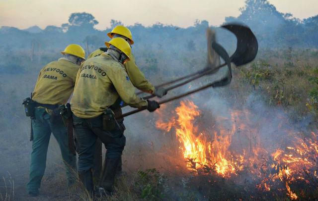 Ibama abre 45 vagas para brigadistas no Amapá