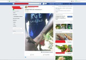 PF cumpre mandado contra homem que negociava animais pela web
