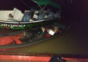 Embarcação com gado furtado é interceptada pelo Batalhão Ambiental