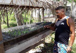 Jandiá: moradores que cultivam plantas temem perder renda com desocupação