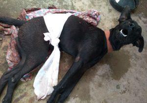 Cão é ferido com golpe de terçado; vizinho é suspeito