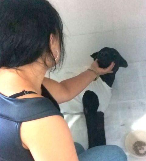Cão ferido com terçado por vizinho pode ficar sem andar