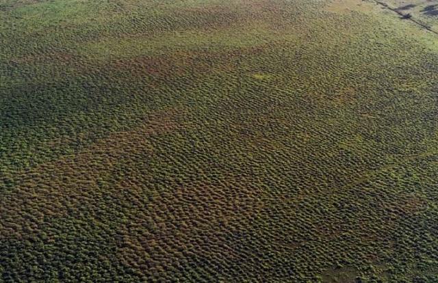 Achado arqueológico inédito no Brasil é descoberto em Calçoene