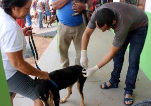 Quase 40 mil cães e gatos são vacinados contra a raiva em Macapá