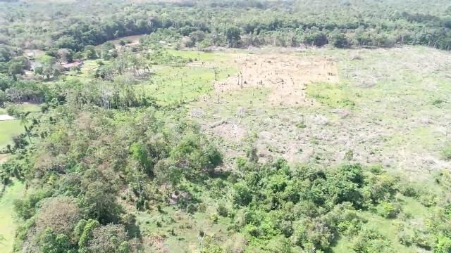 Polícia Civil detecta desmatamento por satélite e prende responsáveis