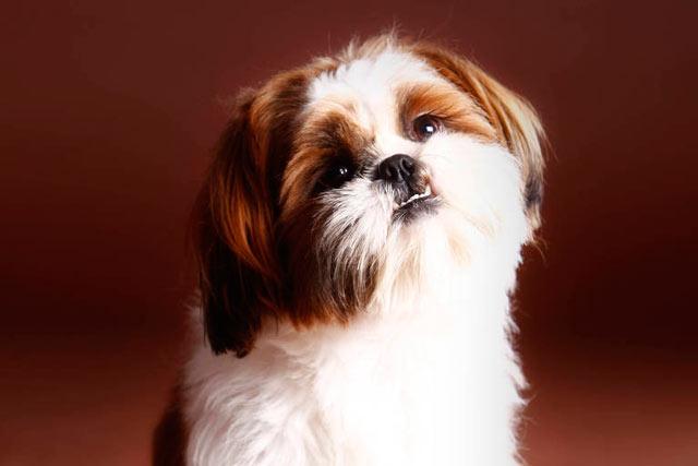 Evento alerta para câncer de mama em cães, que atinge 1 em cada 4