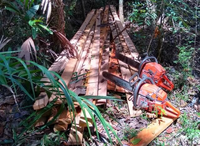 Mais de 50 pontos de desmatamento são encontrados em Cutias