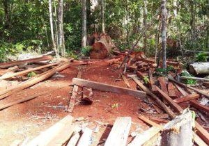 Em Porto Grande, 3 são presos por desmatamento ilegal