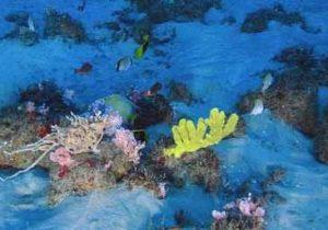 Estudo sobre corais no Amapá é falso, dizem especialistas