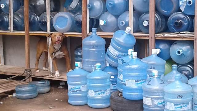 Operação fiscaliza condições da venda de água mineral no AP