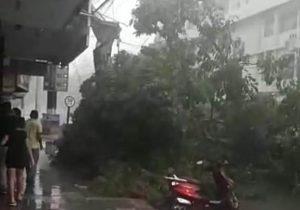 Desespero: Árvore cai sobre carro no Centro de Macapá