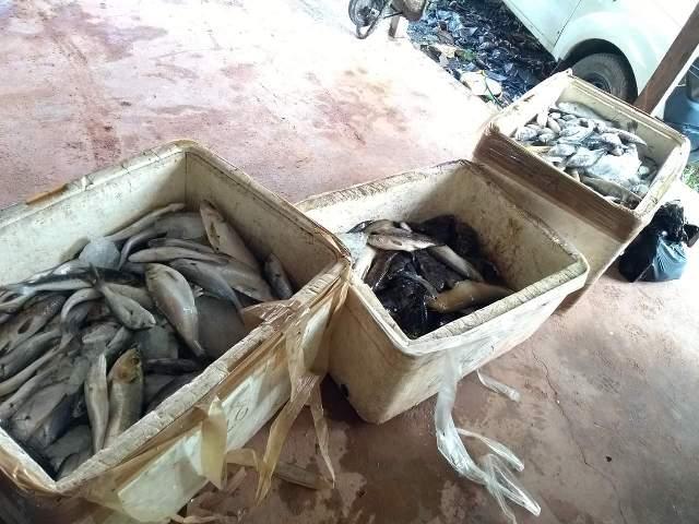 Em Santana, 200 kg de pescado do defeso são apreendidos