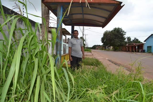 Tomada por mato, parada de ônibus tem até pé de milho