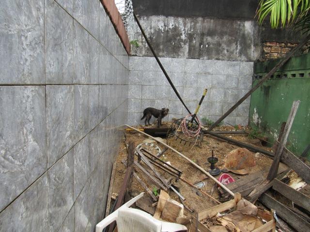 Criados de forma inadequada, 20 cães são recolhidos de residência