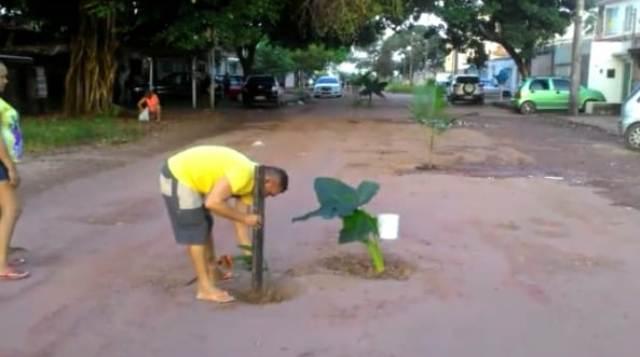Contra buracos, moradores plantam árvores no meio de avenida