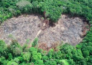 Amapá tem o menor índice de desmatamento da Amazônia