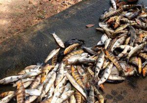 MP pede que Justiça aplique multa em hidrelétrica por mortandade de peixes