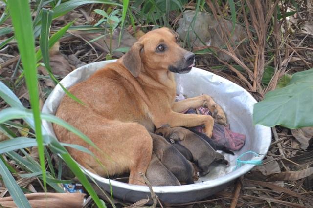 Abandonada em bacia no mato, mãe tenta sobreviver com os filhotes