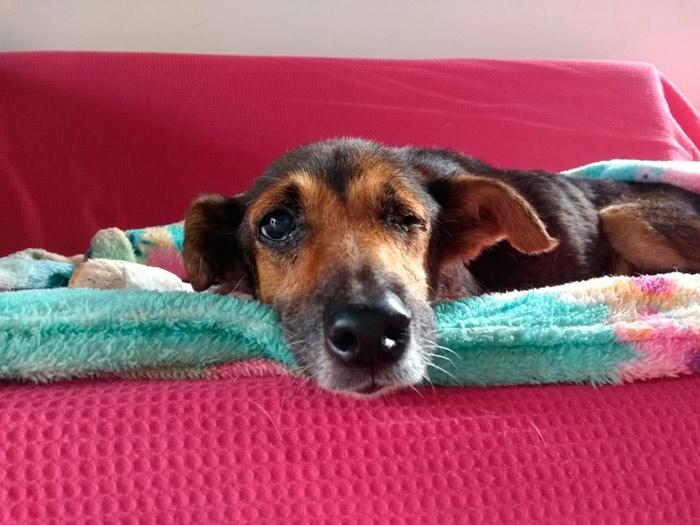 Cadela idosa que passou a vida nas ruas de Macapá precisa de um lar