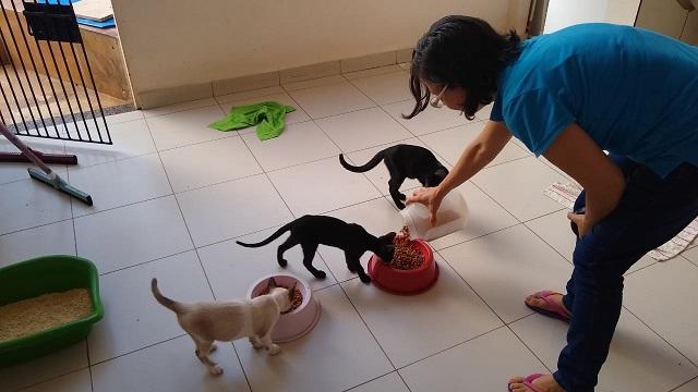 Servidora pública do Amapá já salvou mais de 100 gatinhos