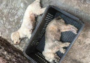 Cães morrem após tomar vacina contra raiva; prefeitura suspendeu o serviço