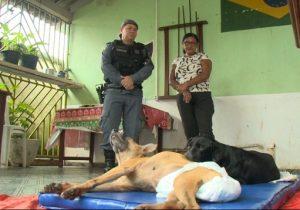 PMs ajudam a tratar cães feridos durante perseguição policial