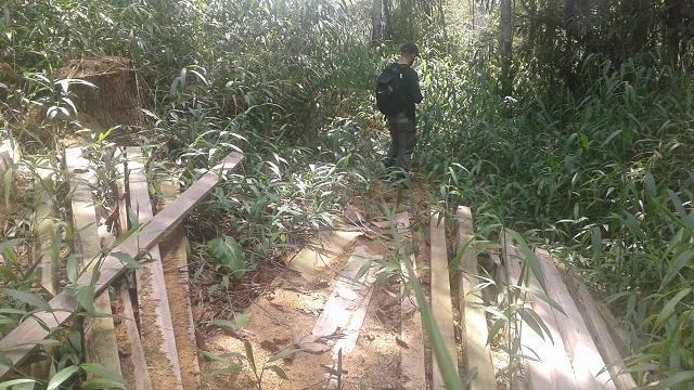 PC descobre 'serraria' dentro de área de preservação no Amapá