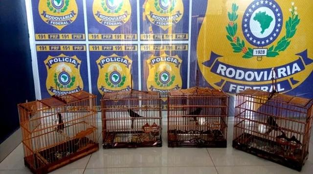 Animais silvestres e madeira ilegal são apreendidos na BR-210