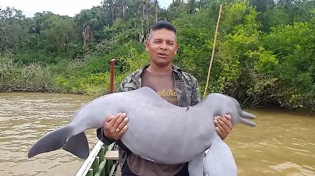 Polícia identifica pescador que gravou vídeo comemorando morte de boto