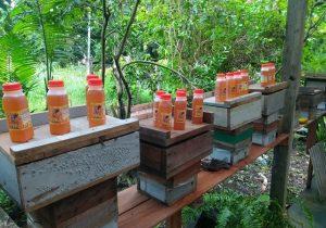 Trilha do mel: amapaenses preparam novo passeio turístico pós-pandemia