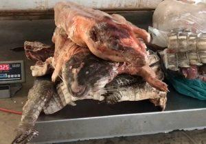 Animais silvestres são caçados e mortos ilegalmente na Floresta Nacional do Amapá