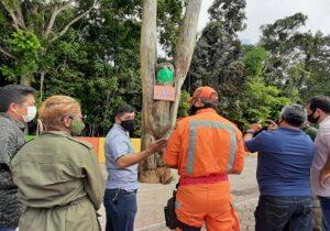 Prefeitura recua e fala em recuperar preguiça esculpida em madeira