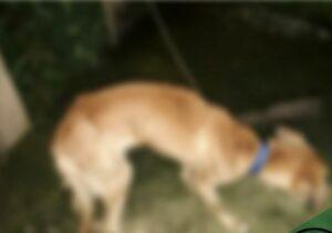 Dona de cão que morreu desnutrido é presa