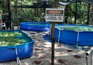 Bioparque vai abrigar Centro de Recuperação de peixes-boi resgatados no Amapá