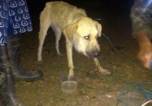 Cachorro que estava com garotos perdidos é achado; buscas continuam