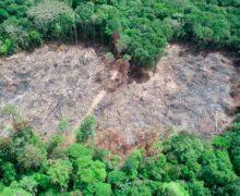 Desmatamento causa prejuízo de R$ 1 mil por dia no Amapá, diz Ministério Público