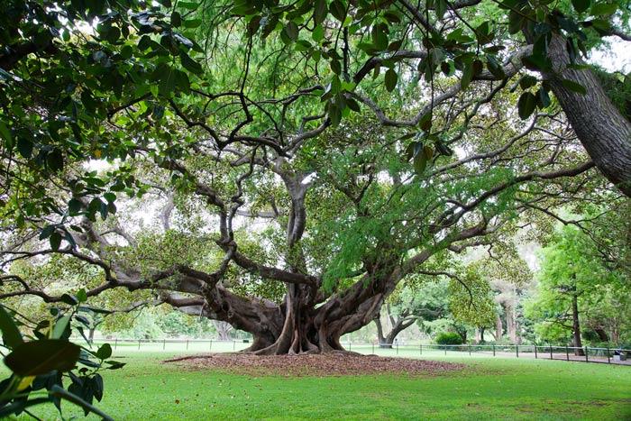 Podcast: A árvore é conhecida por seus frutos