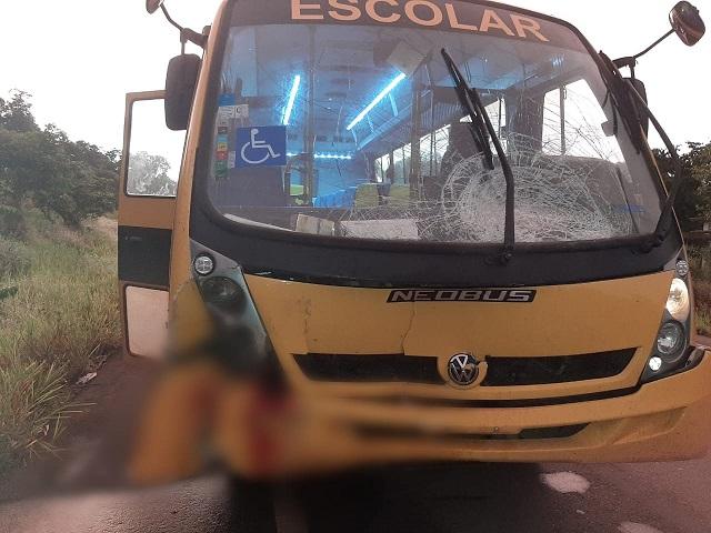 Animais fogem de fazenda e provocam acidente com ônibus de pacientes do Mais Visão