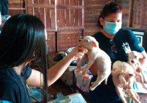 Cães de raça são resgatados doentes e com fome
