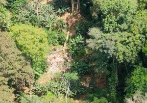 Árvore cai em cima de barracão de castanheiros no Jari