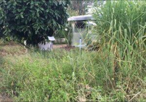 Matagal encobre túmulos em cemitério de Macapá