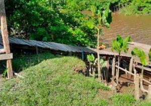 Terras Caídas: Vereador alerta para aumento da destruição em comunidades; OUÇA